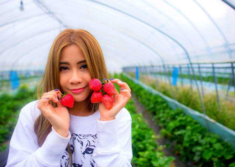イチゴ狩りを楽しもう!