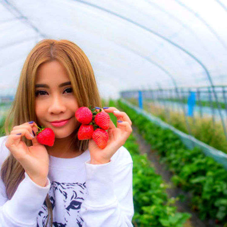 Strawberry Picking in Japan