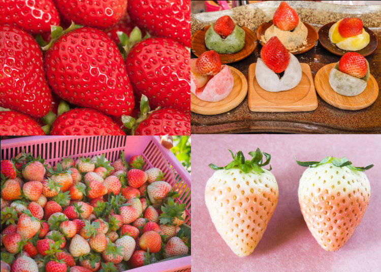 Strawberry, the Queen of Japanese Spring Foods