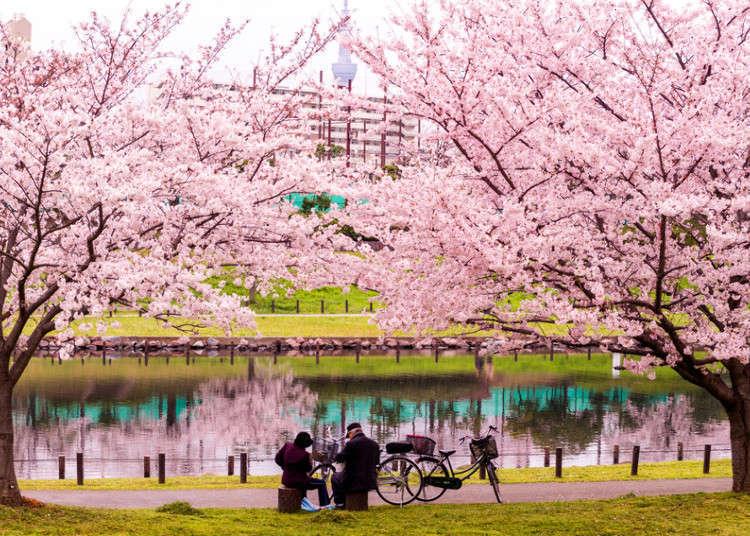 봄철에 도쿄에서 할 수 있는 9가지!
