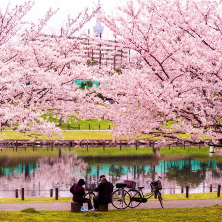 東京春爛漫,春天的東京不可錯過的9件事