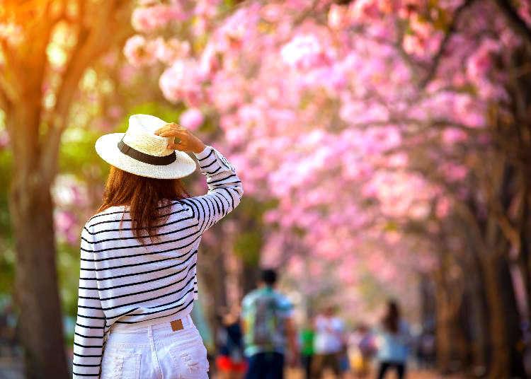 봄 날씨와 복장・꽃구경 정보를 관광 전에 체크해보자!