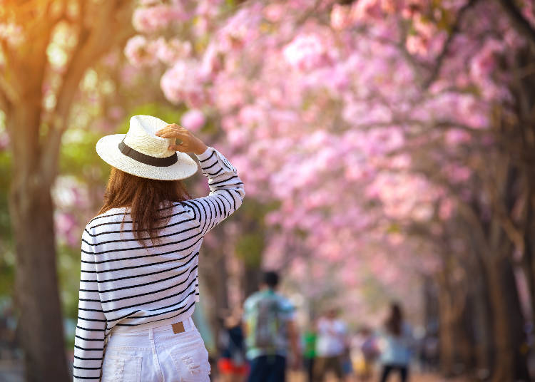 Spring Weather: Tokyo's Temperatures from March to May