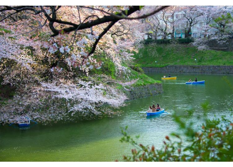 오직 봄에만 즐길 수 있는 관광!