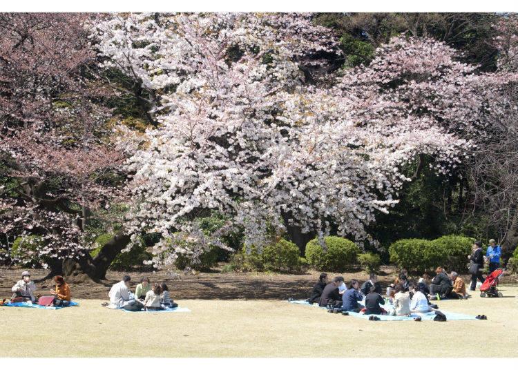 說到春天,當然要去「賞櫻」囉!