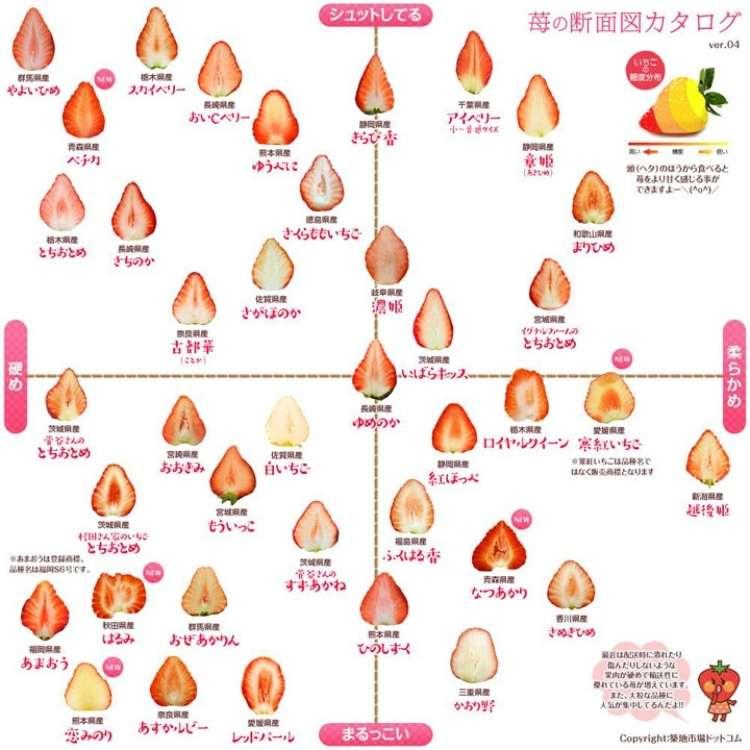百果繚乱!日本のイチゴを知る・味わう・楽しむ