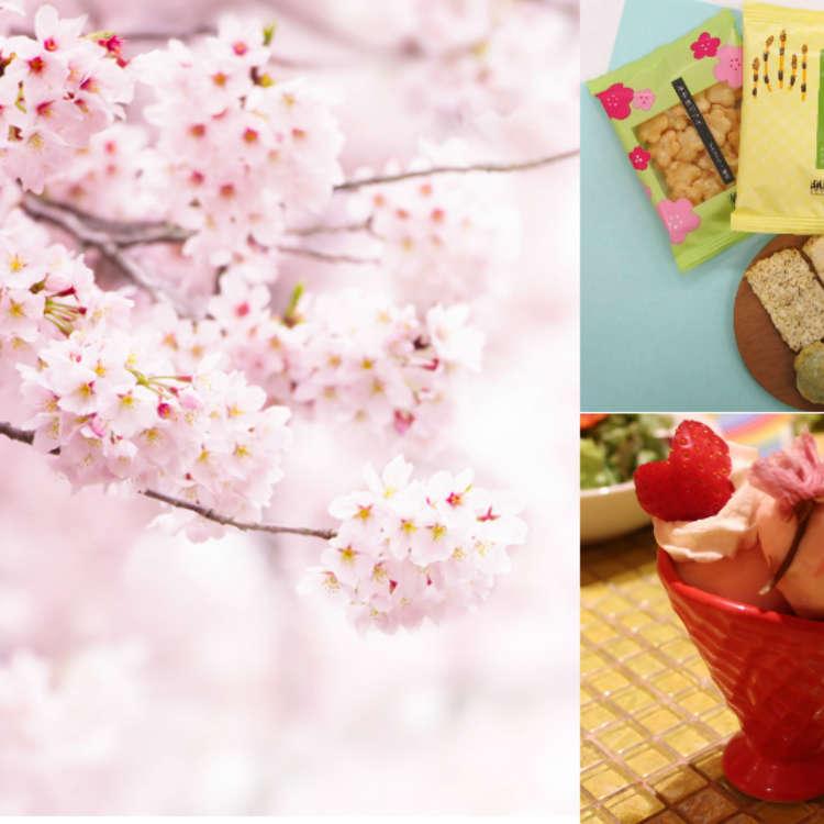 일본의 봄의 환대! '벚꽃잎 캠페인' 개최 중