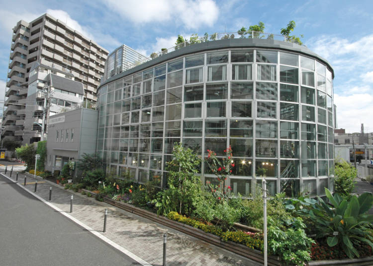 Shibuya Fureai Botanical Garden Center: Lush, Exotic Nature for a mere 100 Yen!