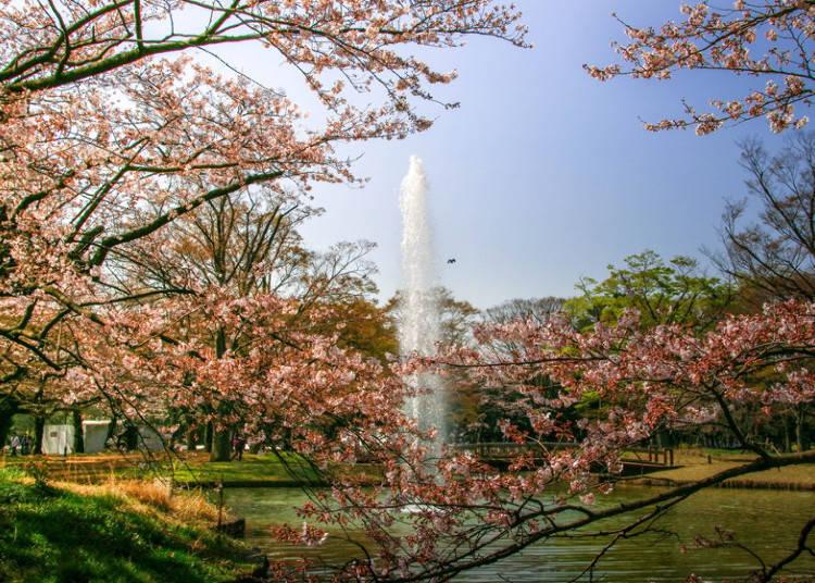 巡遊澀谷、原宿、表參道的春天自行車之旅