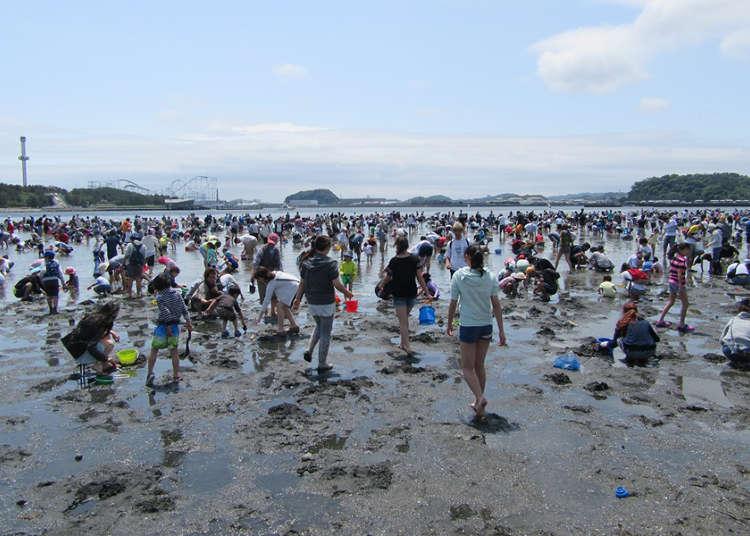 無料で楽しめる!都内周辺の潮干狩りスポット