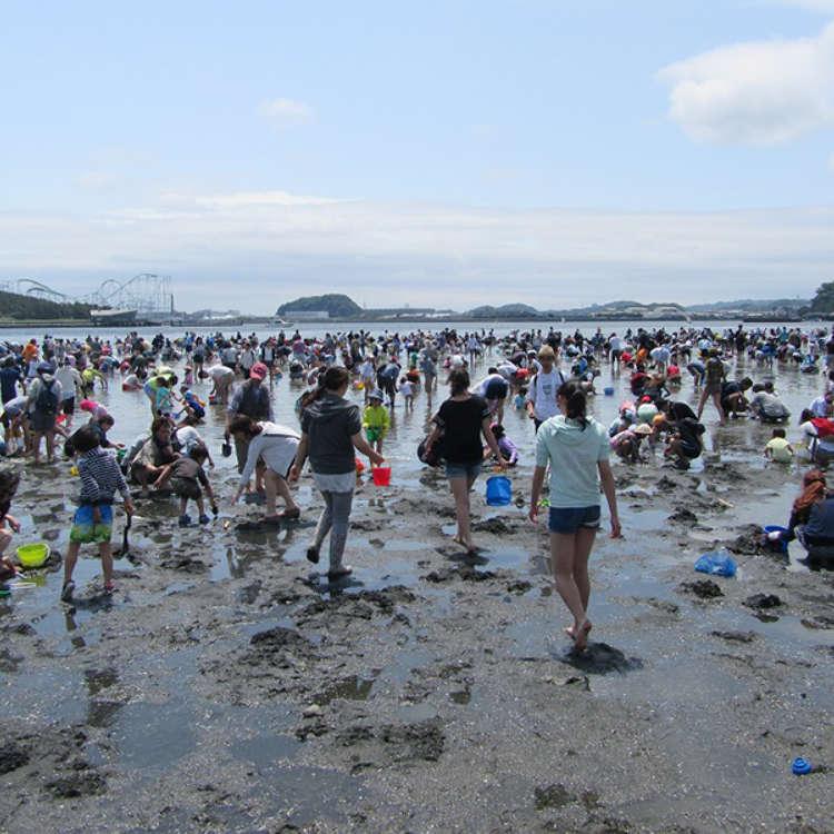 免费体验!东京都市周边捡贝壳景点
