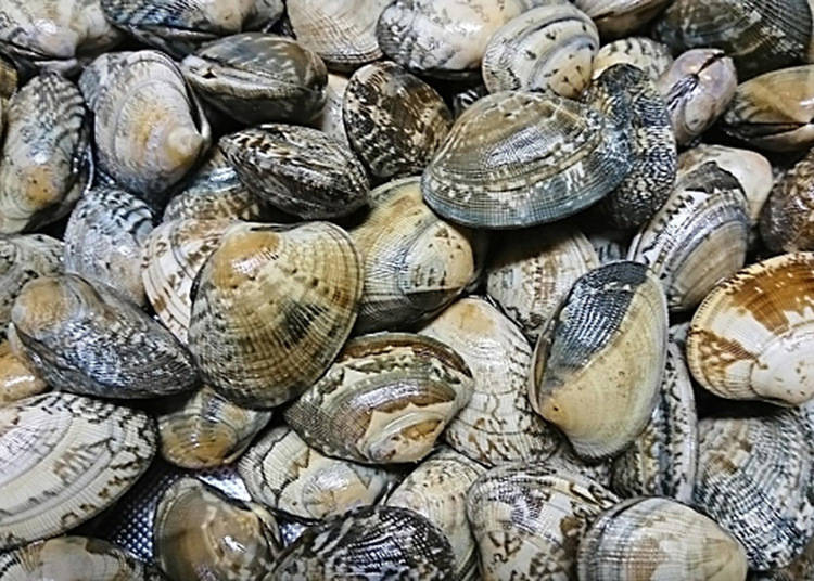The Rules and Manners of Clamming and Shellfish Hunting