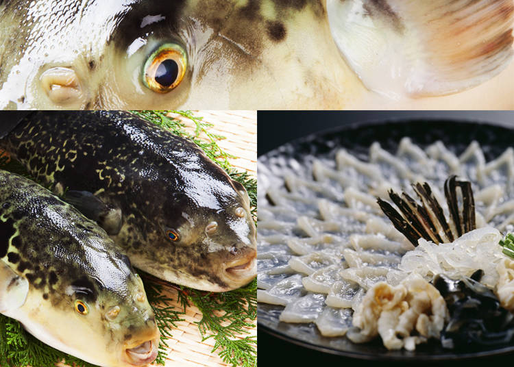 7) Fugu – Pufferfish