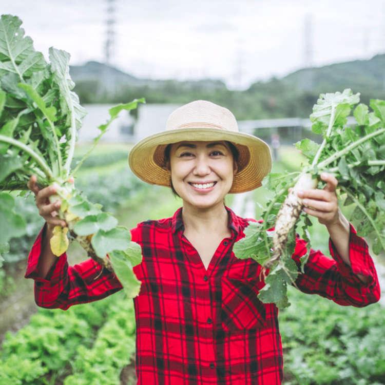 日本の定番野菜10選