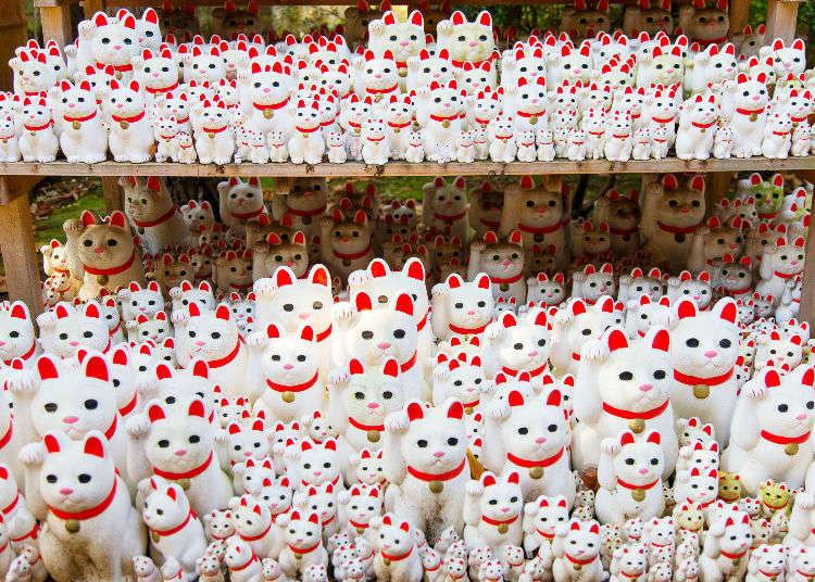 도쿄의 고토쿠지(豪德寺)는 마네키네코의 발상지!