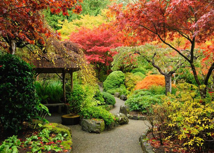 日本秋季風物詩-紅葉