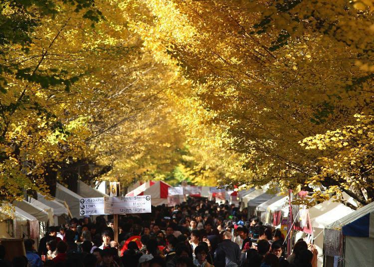 日本最高学府举办的学术性大学祭/东京大学 駒场校区
