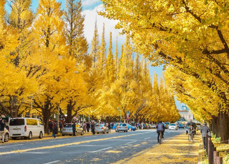 以金黄银杏为看点的红叶景点