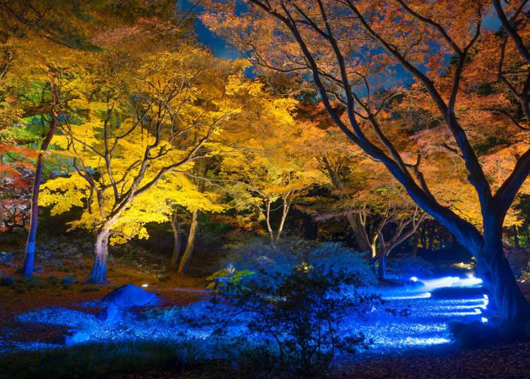 气氛唯美 能欣赏夜枫的红叶景点