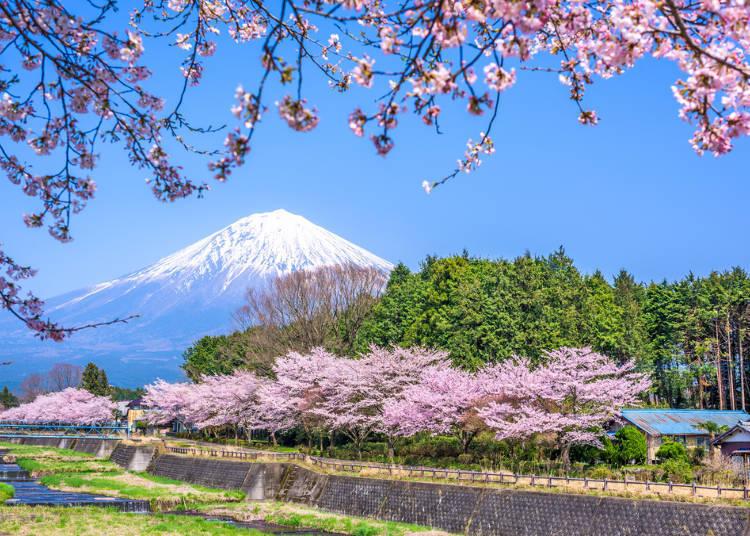 Central Japan Selections - Shizuoka