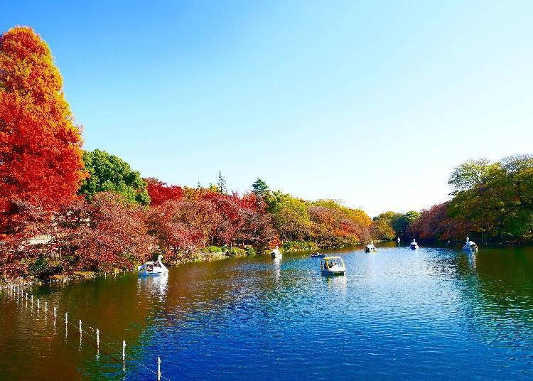 Inokashira Park: Beautiful in Every Season