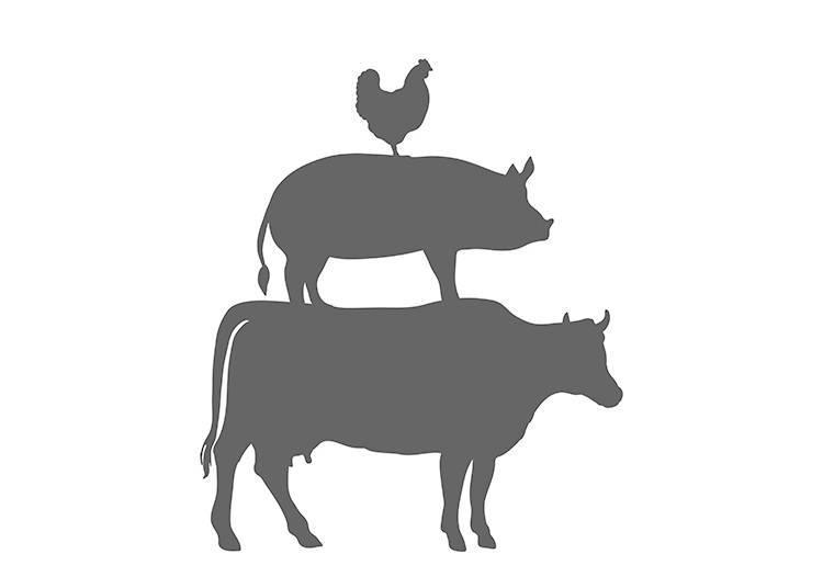 <宗教・文化編>  イスラム教徒に豚、ヒンドゥー教徒に牛は絶対NG!