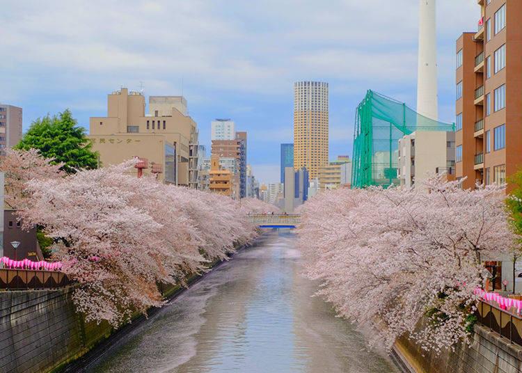 도쿄에서 벚꽃명소로도 인기가 높은 메구로 강 주변