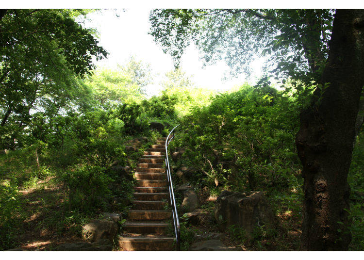 3. Toyama Park – Shinjuku's Little Oasis of Calm and Respite