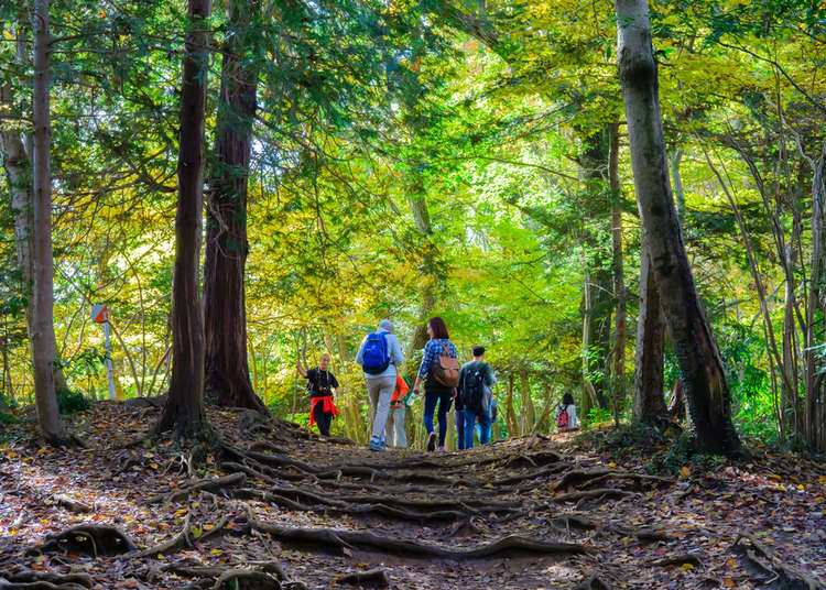 5 Hikes You Can Do While Visiting Tokyo