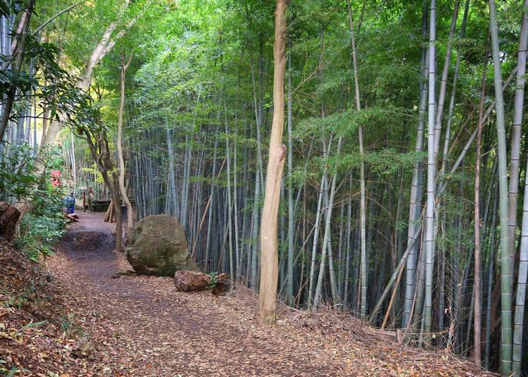 4. Tenen Hiking Trail