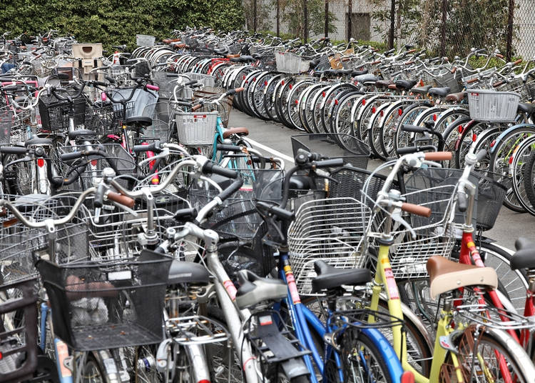 3. Bicycles are everywhere