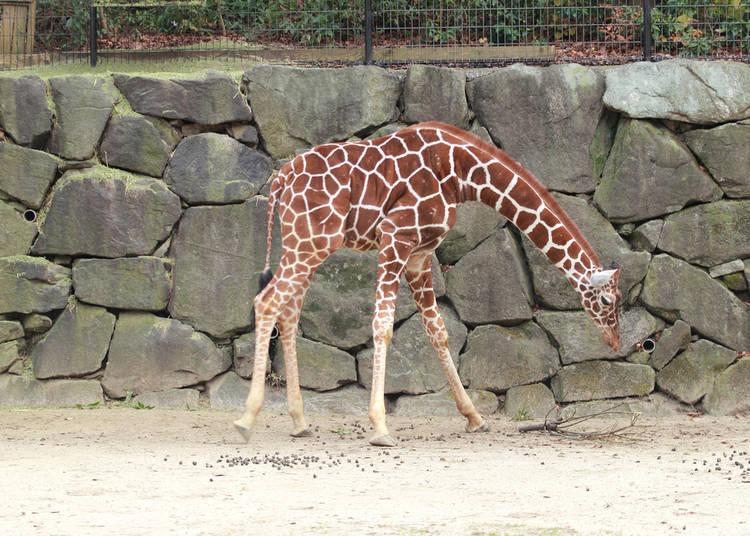 Visit Zoorasia for Some Animal Fun