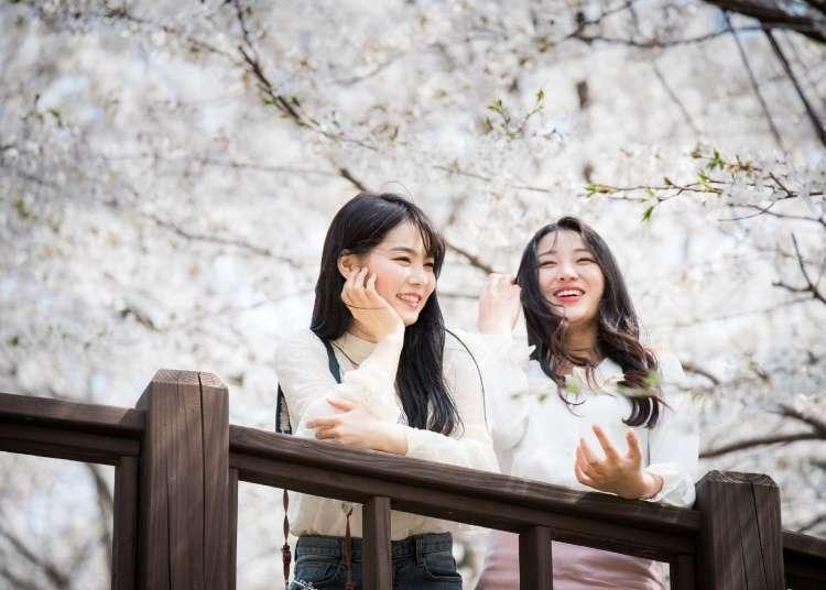 日本四季花卉看不完,一整年的賞花行程快收藏