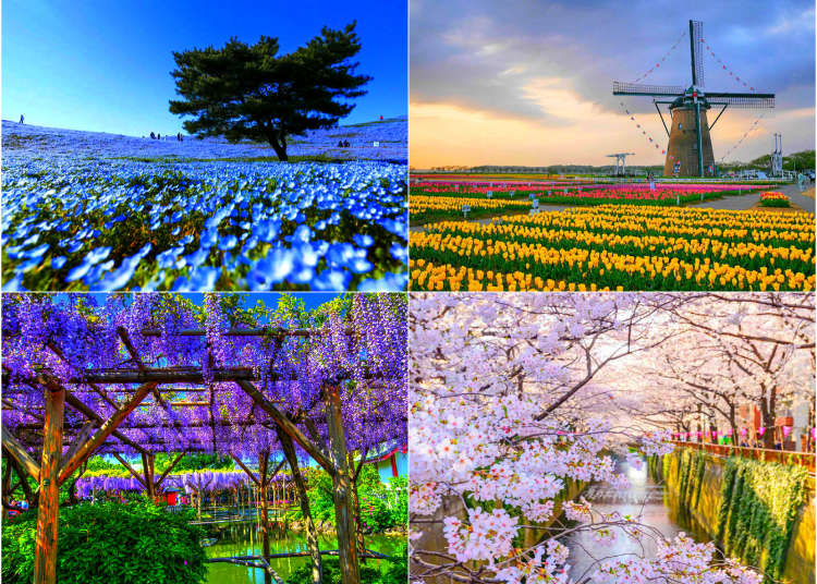 Where to Go to See Flowers in Japan during Any Season: 2019
