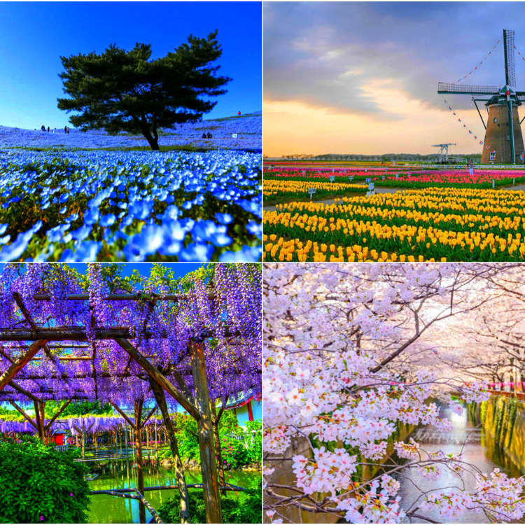 Where to Go to See Flowers in Japan during Any Season: 2019 Edition!