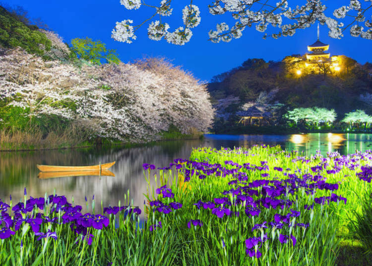 What flowers bloom in Summer in Japan