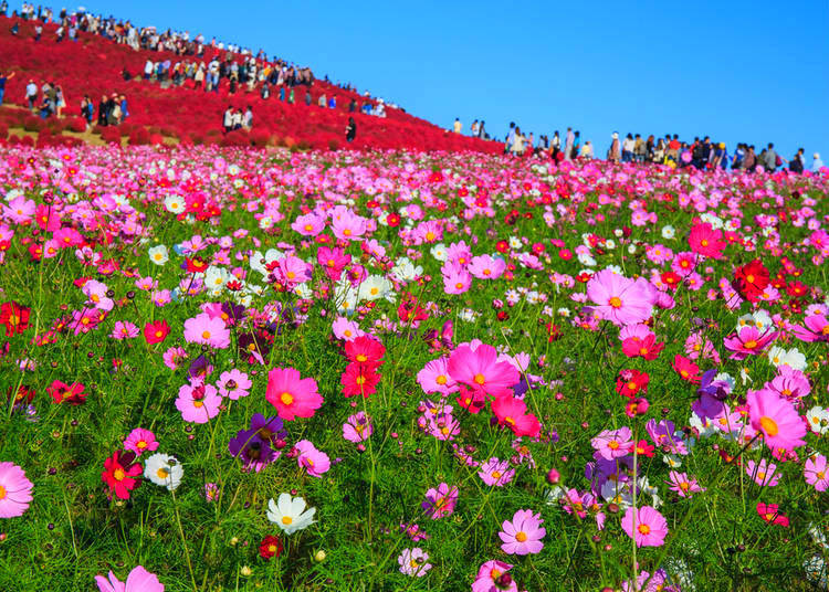 What flowers bloom in Autumn 2019 in Japan
