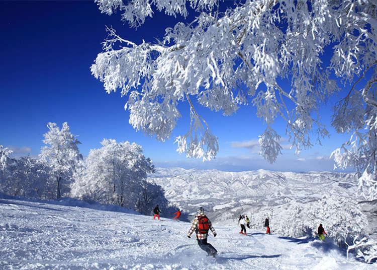享受激起片片粉雪的暢快!野澤溫泉滑雪場