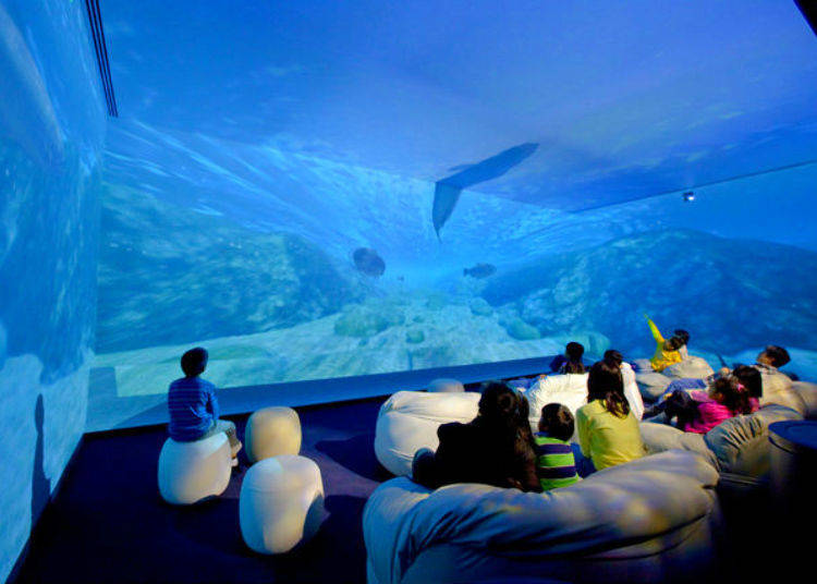 The Aqua Trip Theater: Follow the Journey of Water