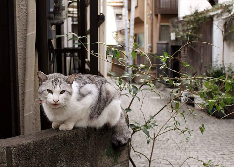 理由九 : 貓迷的尋貓聖地