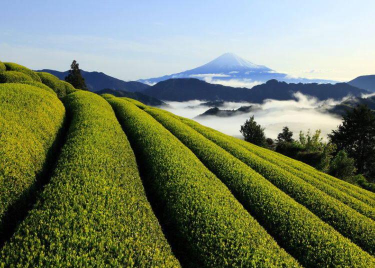 Green Tea (Shizuoka)