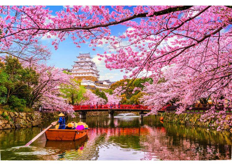 Sakura Season! Your Ultimate Guide to Cherry Blossoms