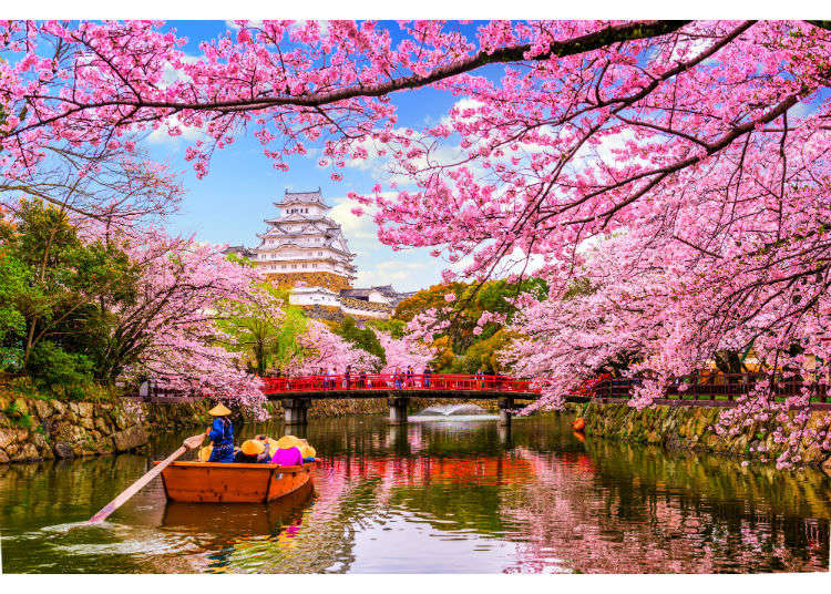 Cherry Blossoms FAQ - The Ultimate Guide to Sakura Trees in Japan!