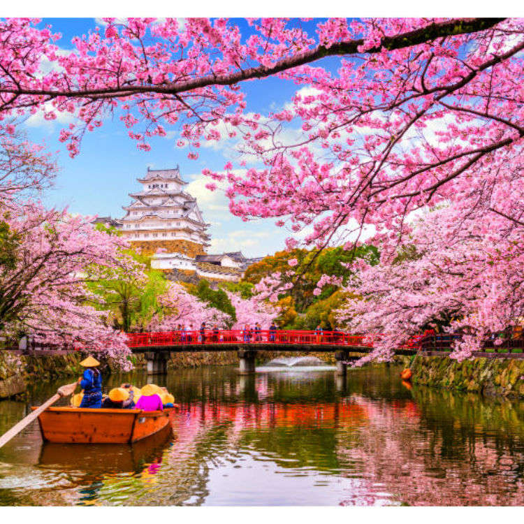 Sakura Season! Your Ultimate Guide to Cherry Blossoms