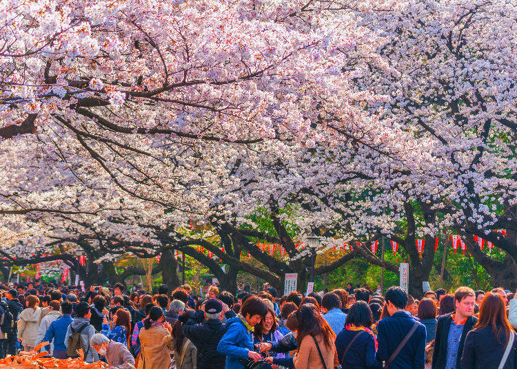 Q2. What's the point of hanging out underneath cherry blossom trees?