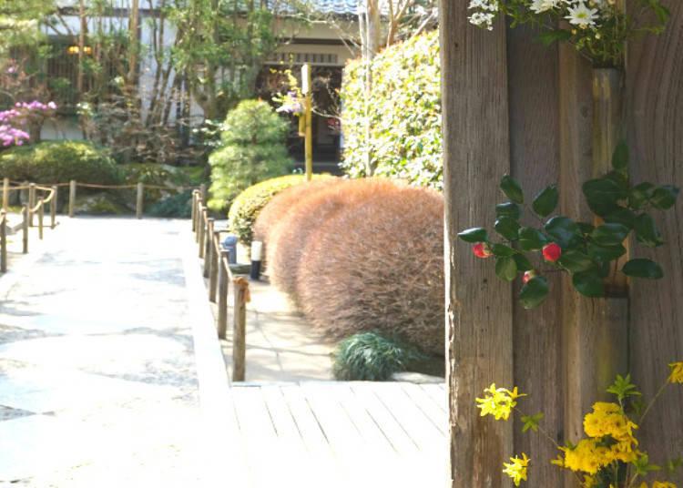More than Hydrangeas: Meigetsu-in's Seasonal Beauty