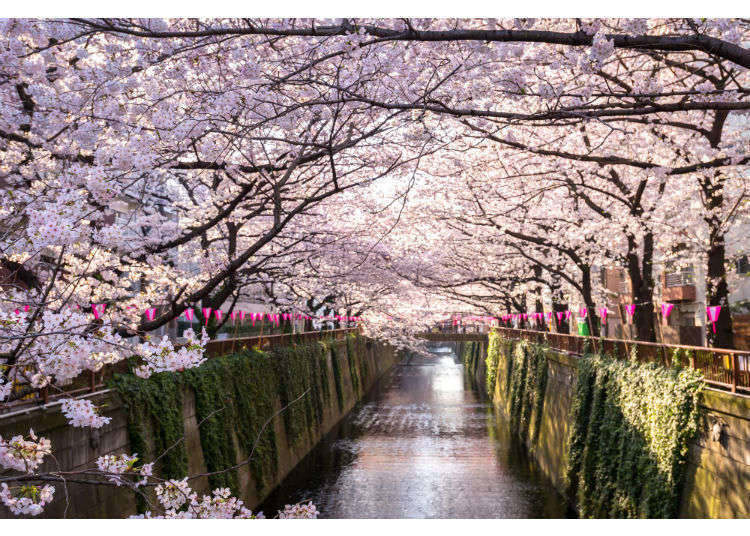 Spring in Tokyo: Temperatures & What to Pack for Tokyo in March, April, and May
