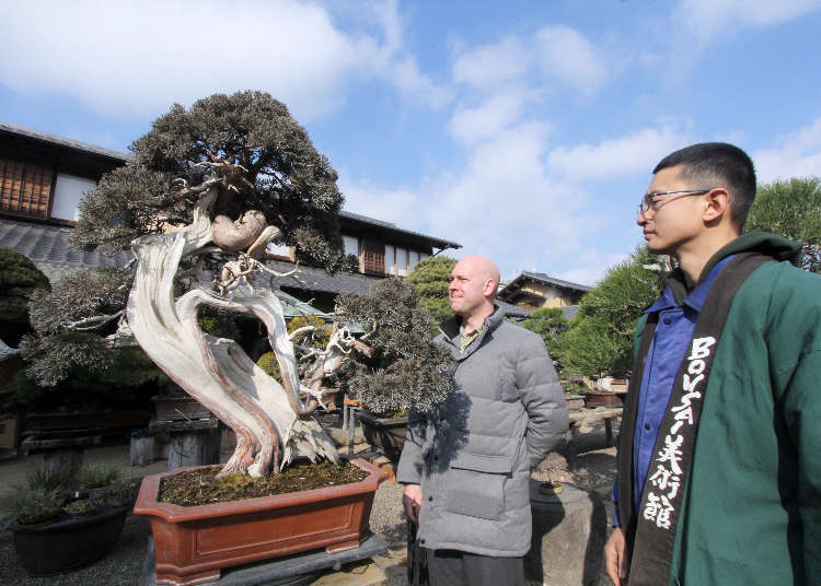 Million-Dollar Bonsai!? How To Tell A Bonsai Legend Apart