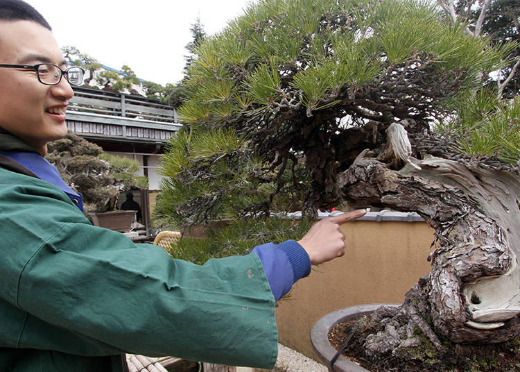 ...and the Million-Dollar Bonsai is B!
