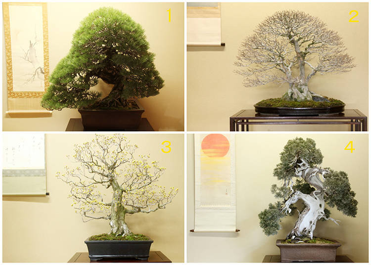 The Bonsai Catalog: What are the Best Trees for Bonsai?
